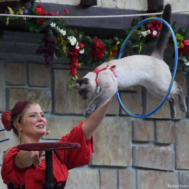 Entertainment: Cirque Du Sewer acrobat trained cat and rat