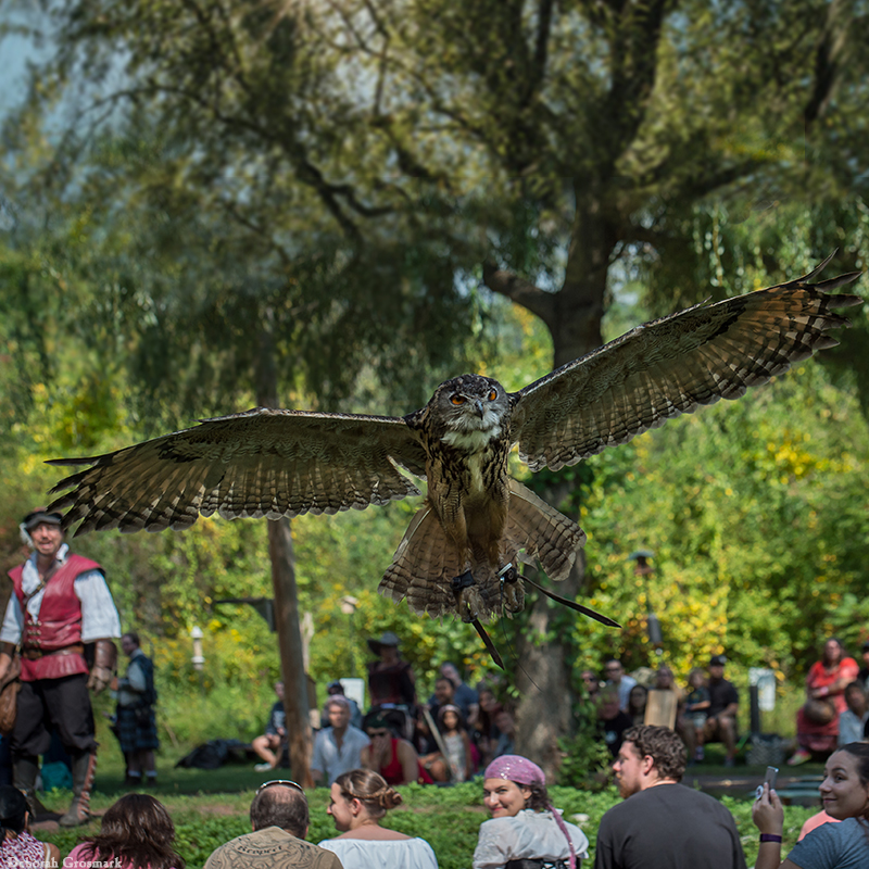 Entertainment: Sky Kings Falconry